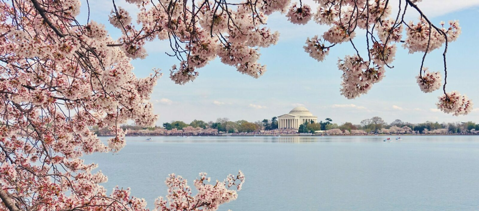 View of the Jefferson Memorial, a landmark monument by the Tidal Basin during the cherry blossom season in the nation's capital.